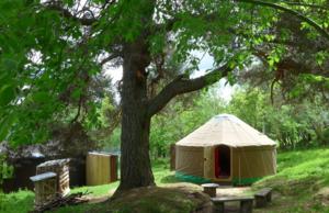 The Old Pine Yurt - Photo 1