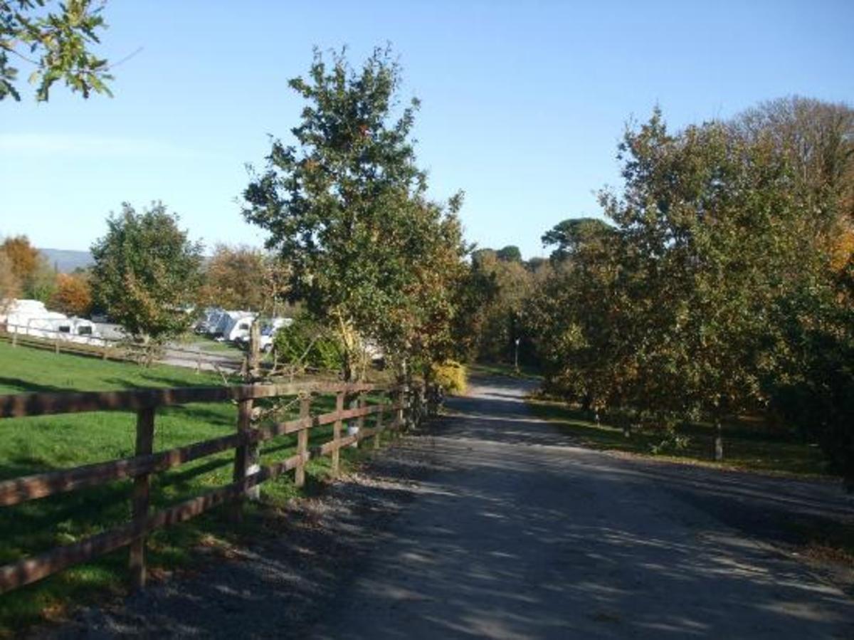 Tree Grove Caravan and Camping - Photo 2