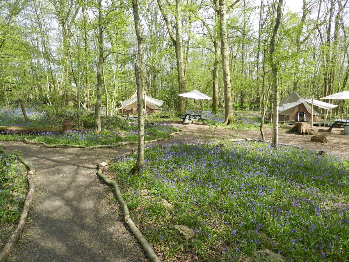 Wild Boar Wood Campsite - Photo 3