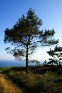 Sites et Paysages Le Panoramic - Photo 25