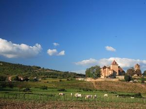 Les Castels Château de L'Epervière - Photo 45