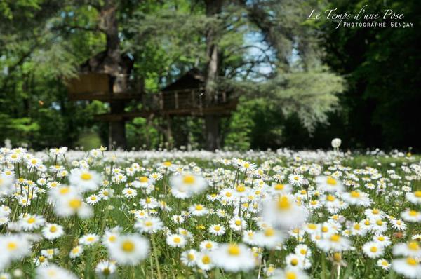 Le Parc de la Belle - Photo 3