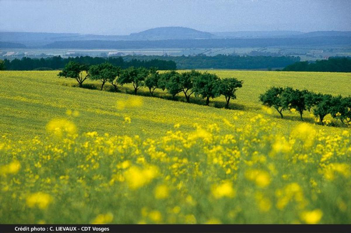 Sites et Paysages Au Clos de la Chaume - Photo 63