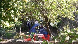 Camping La Pineta - Photo 6