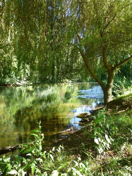Le Bois du Coderc (Ouvert à l'année) - Photo 10