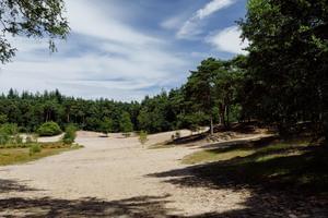 RCN Vakantiepark het Grote Bos - Photo 30