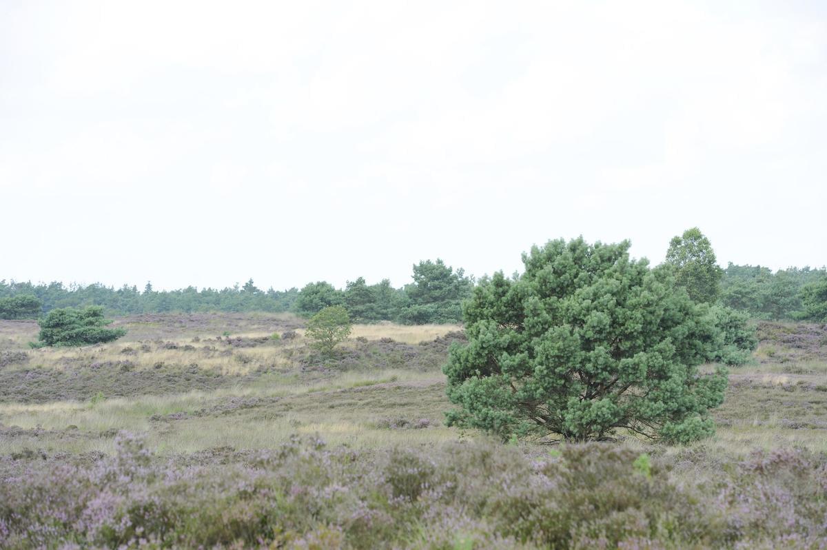 RCN Vakantiepark de Jagerstee - Photo 27