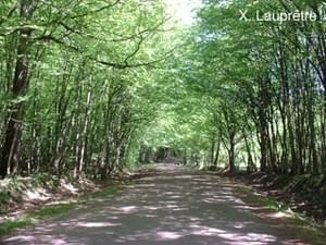 Le Bois Guillaume - Photo 75