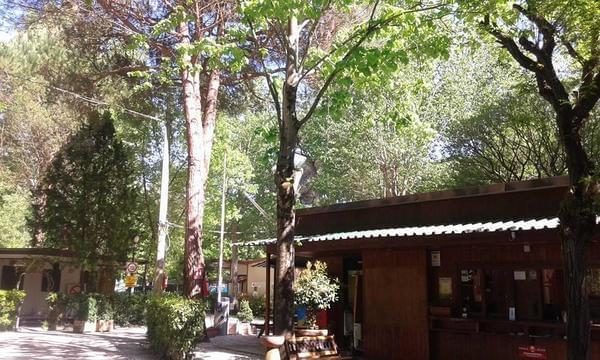 Campeggio Bosco Verde - Photo 3