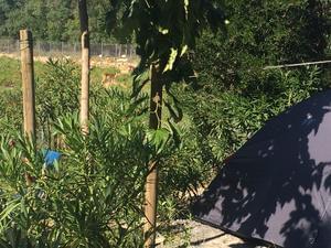 Camping La Grange Neuve - Photo 8
