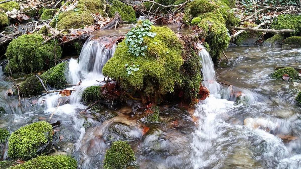Aire naturelle de Camping La Ferme aux Cerisiers - Photo 4