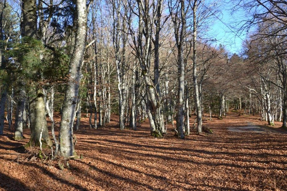Aire naturelle de Camping La Ferme aux Cerisiers - Photo 24