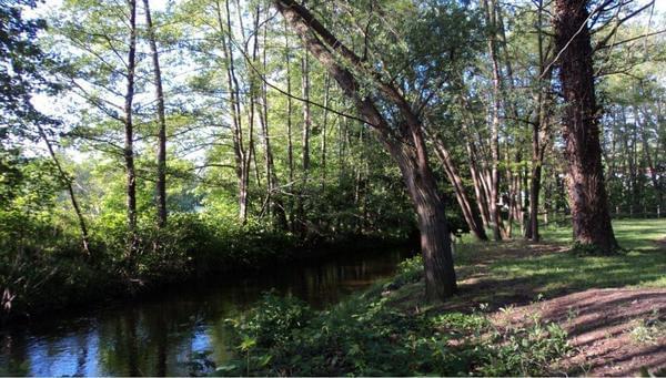 Camping de l'Orangerie du Domaine de Giraud - Photo 8