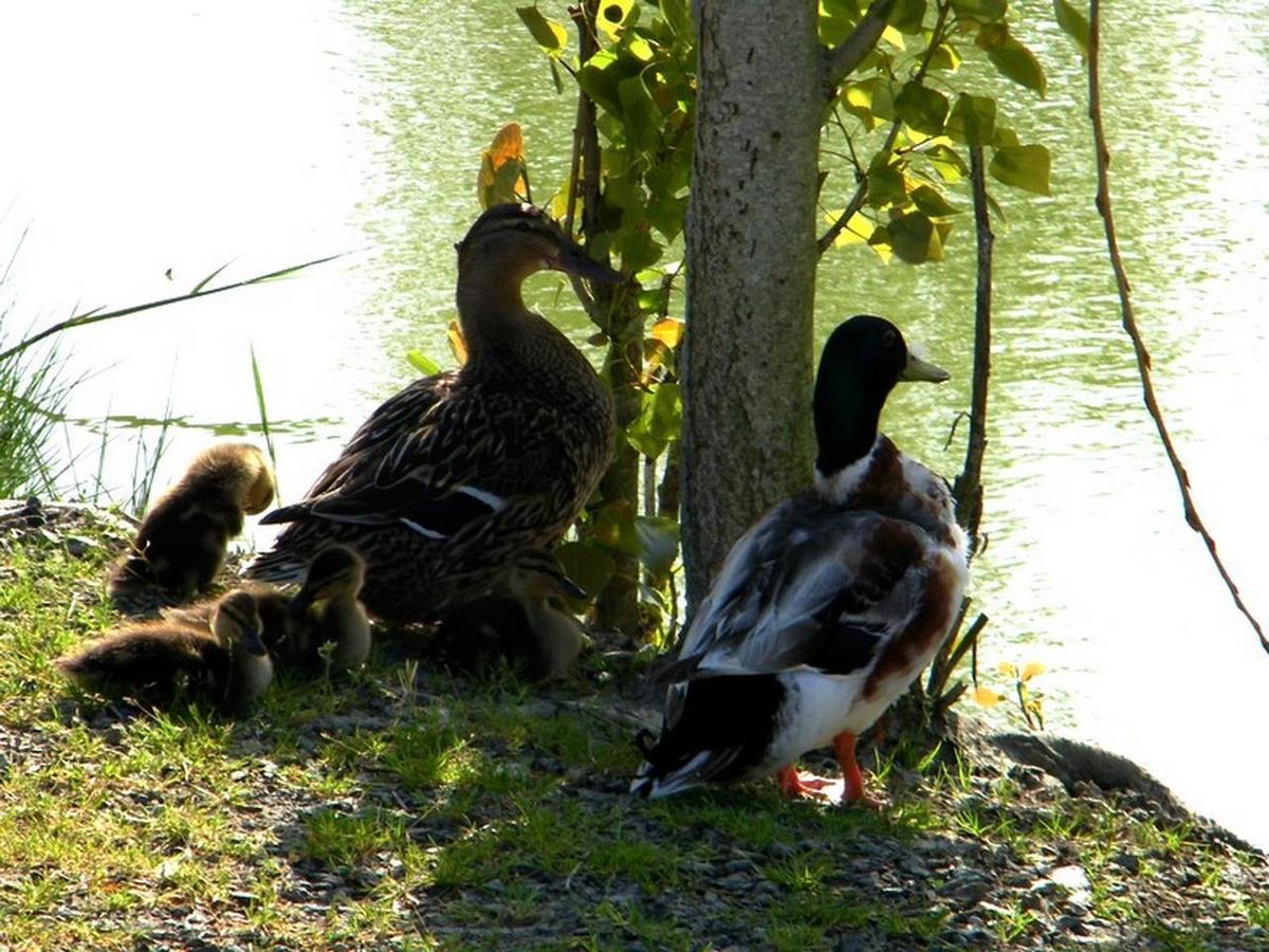Domaine Le Jardin du Marais - Photo 17