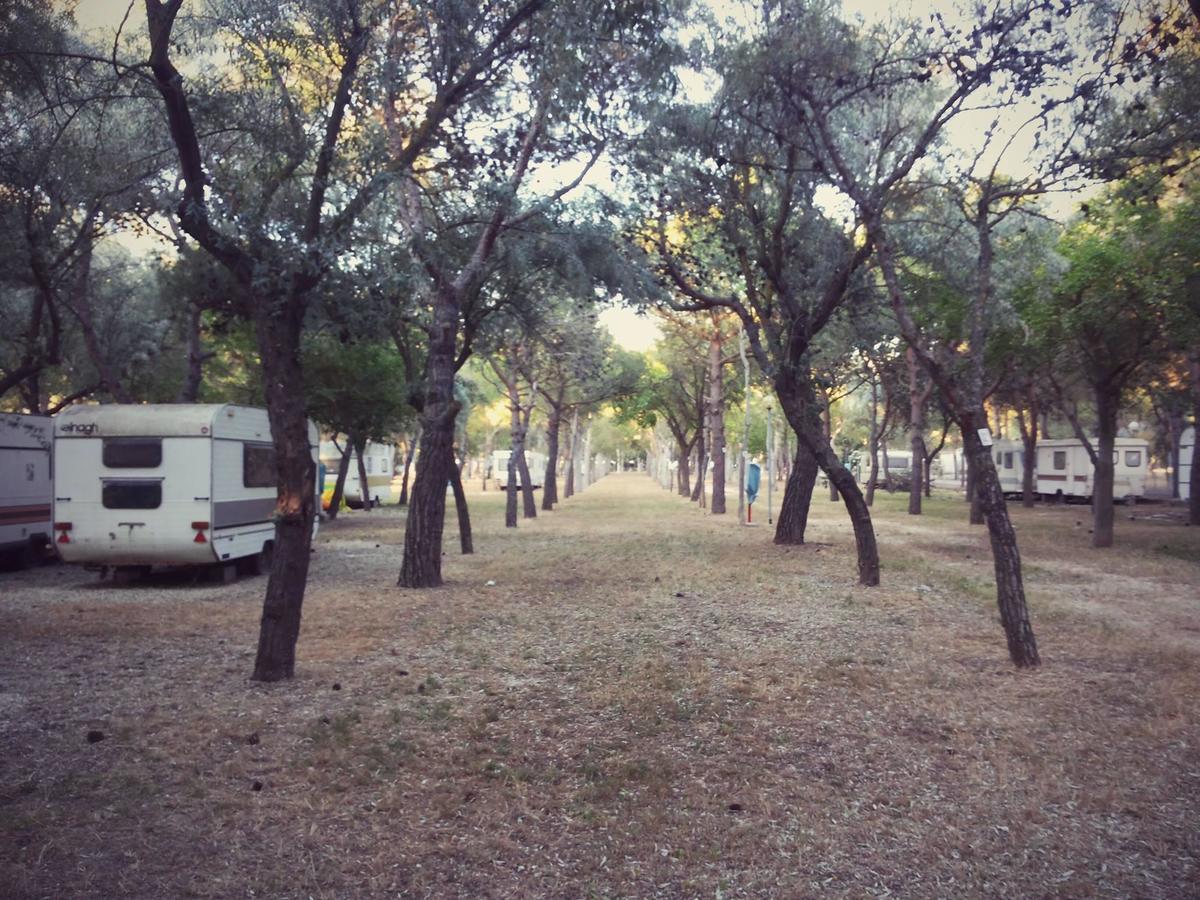 Camping Tellina - Photo 2