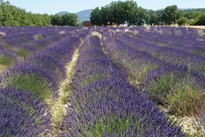 Flower Camping l'Epi Bleu - Photo 24