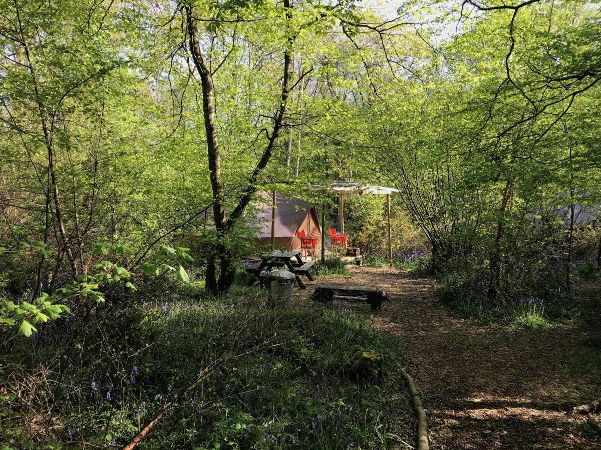 Wild Boar Wood Campsite - Photo 2