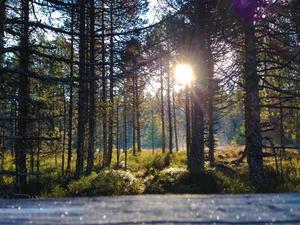 Camping de la Forêt - Photo 47
