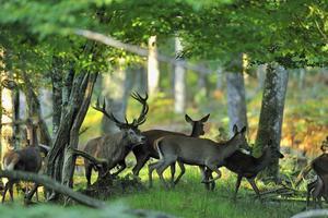 Le Bois Guillaume - Photo 94