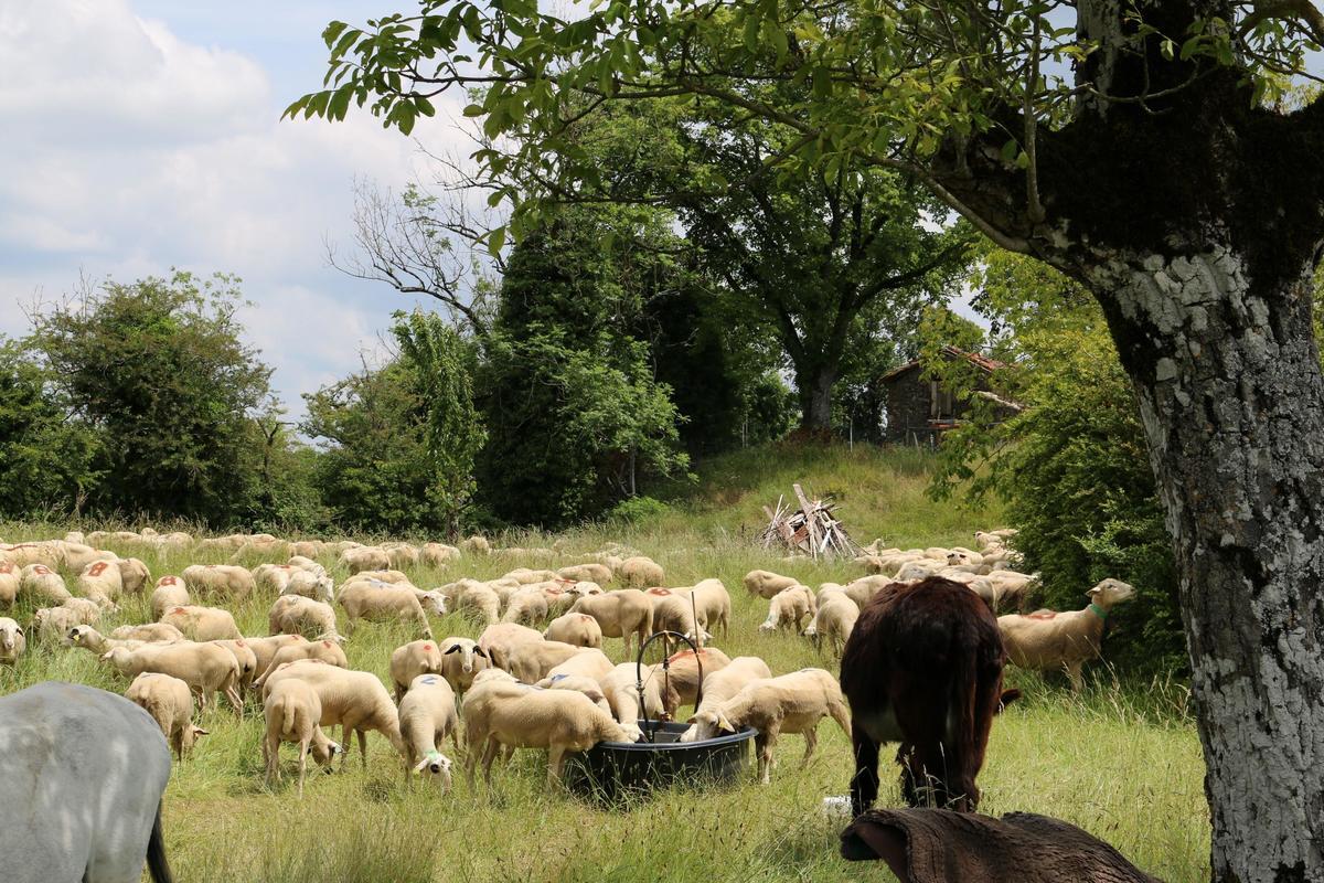 Sites et Paysages Moulin de Chaules - Photo 49