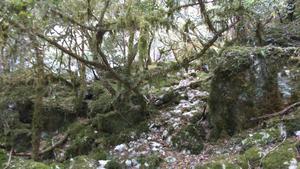 Camping De LA PLAGE à St Cirq Lapopie - Photo 62