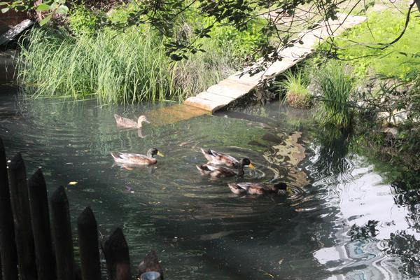 Camping Simplonblick - Photo 10