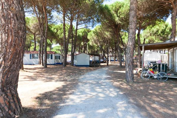 Camping Village Pineta sul Mare - Photo 8