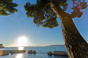 Sites et Paysages Les Pinèdes - Photo 14