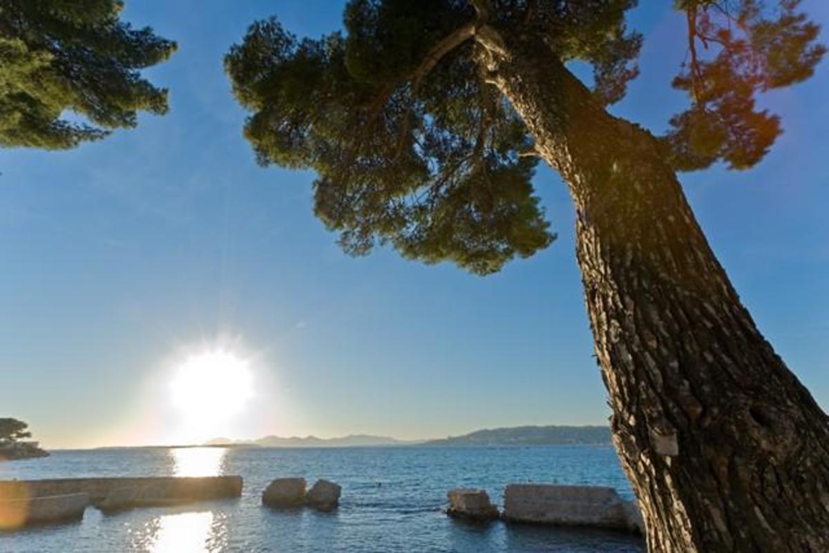 Sites et Paysages Les Pinèdes - Photo 40
