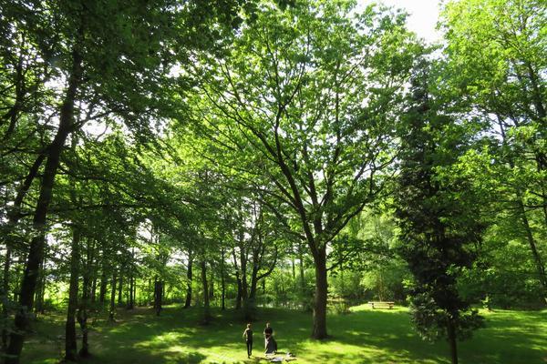 Natuurkampeerterrein Mariahoeve - Photo 8