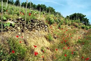 CAMPING ISERAND CALME et NATURE*** - Photo 32
