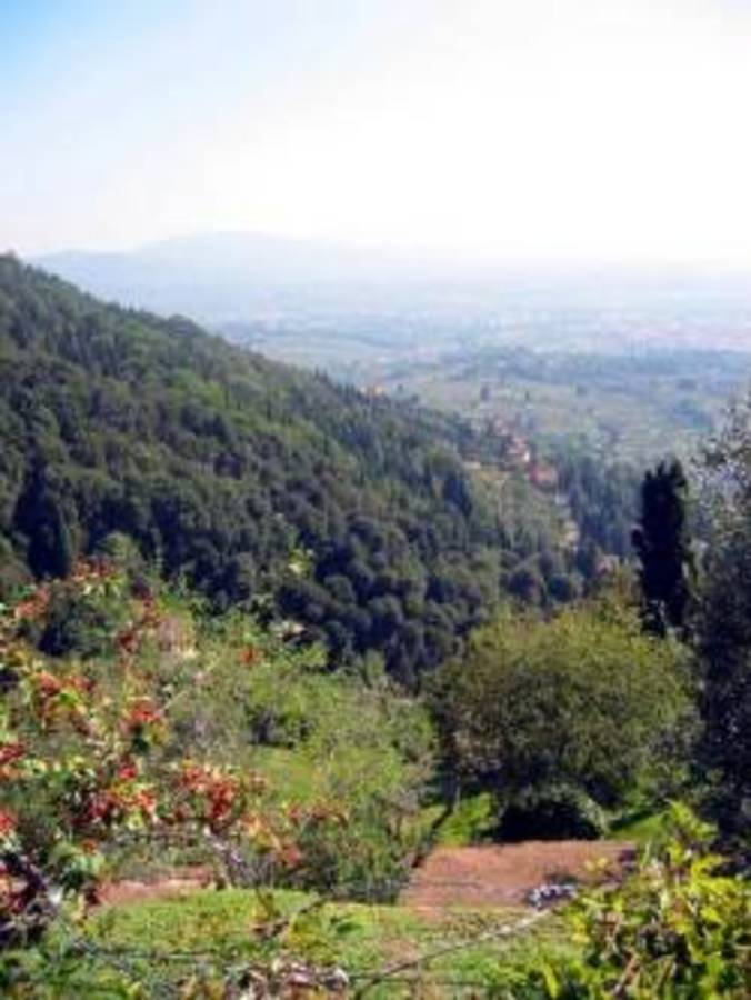 Camping Village  Panoramico Fiesole - Photo 37