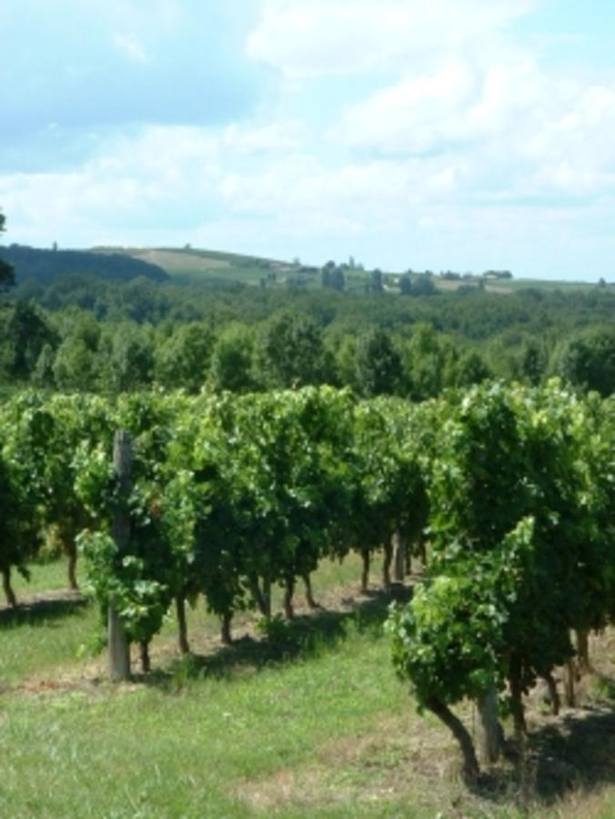 Sites et Paysages Domaine de l'Etang de Bazange - Photo 40