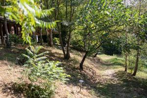 Les Chalets de la Gazonne - Photo 8