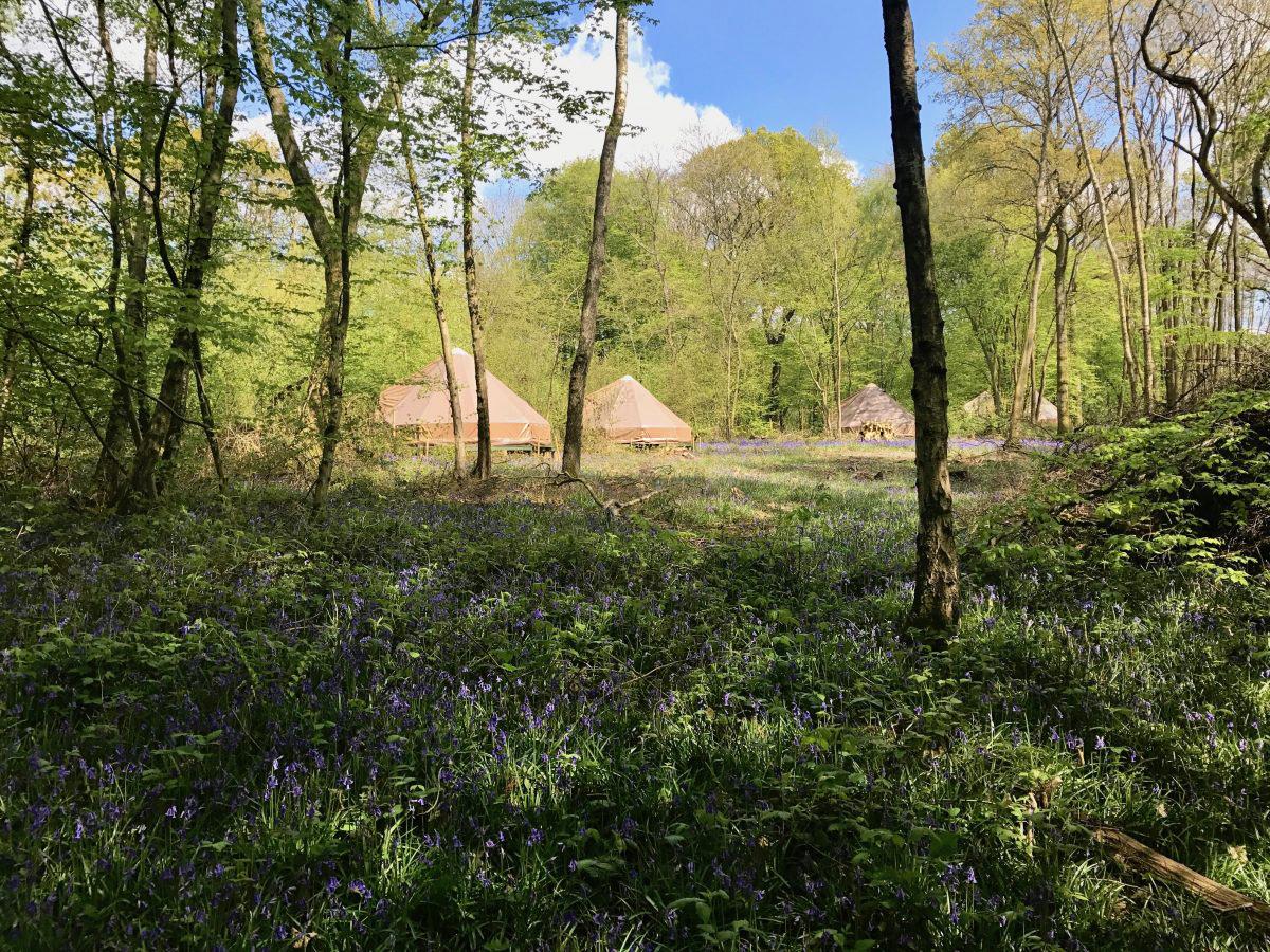 Wild Boar Wood Campsite - Photo 1