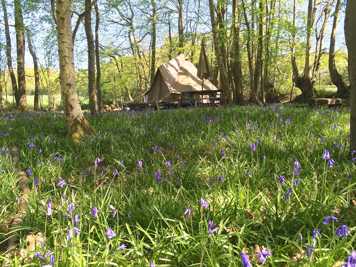 Wild Boar Wood Campsite - Photo 13