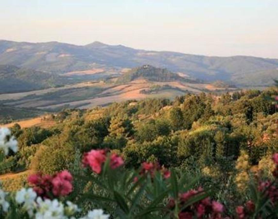 Montescudaio Village - Photo 1107
