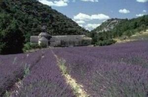 Camping La Pinède en Provence - Photo 1118