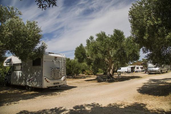 Olivia Green Camping - Photo 1112