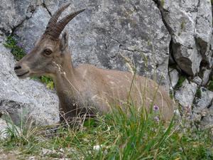 Camping La Pourvoirie des Ellandes - Photo 6202